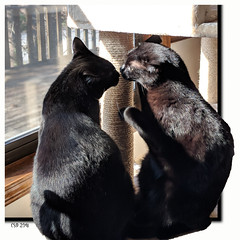 Two Brothers (CopperScaleDragon) Tags: sam dean photomanipulation photoart digitalart internationalcatday brothers love companionship cats blackcat