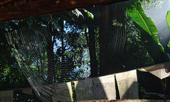 prayer flags and cobweb (xtremepeaks) Tags: prayer flag web spider leaves sun sikkim india