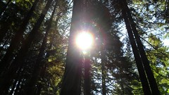 Daydreamin on Skate Creek Rd. in Wa (blogginandmommin) Tags: outdoors nature trees green bright sun clouds blue brown black pretty beautiful amazing wow natural nofilters