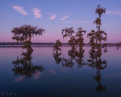 Still of the Morning (Willie Huang Photo) Tags: bayou swamps swamp cypress baldcypress fall autumn reflection sunrise water louisiana southeast landscape nature trees scenic