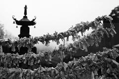 Fortunes hang out to dry (Elios.k) Tags: horizontal outdoors nopeople paper folded knot wire hanging omikuji japanese fortune strip stripofpaper luck prayer shrine bell dof depthoffield shallow focus focusinforeground backgroundblur bokeh blackandwhite monochrome bw mono travel travelling vacation canon 5dmkii camera photography december 2017 yamadera temple risshakuji tashoba okunoin shinto tendai buddhism yamagata yamagataprefecture tōhokuregion tohoku honsu asia japan