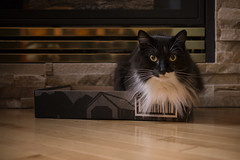 Boxed Lulu (flashfix) Tags: september012018 2018inphotos flashfix flashfixphotography ottawa ontario canada nikond7100 40mm portrait cat feline box fireplace tuxedo tuxedocat fluffy fur prettykitty