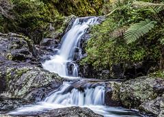 Kaiate Falls (Kiwi-Steve) Tags: waterfall kaiatefalls nz northisland bayofplenty tauranga nature nikond7200 nikon