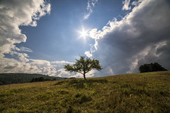 After storm (mystero233) Tags: storm rain clouds sun sky blue tree alone loneliness grass outside outdoor landscape snv spisskanovaves slovakia slovensko home nature
