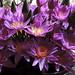 Galle - A Few Flowers