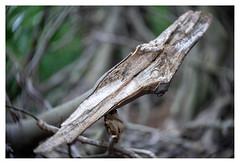 To the bone (leo.roos) Tags: bos dead dood wood hout hyacintenbos denhaag thehague branch tak tree boom stam trunk a7 iscogöttingenduotar8515 projectorlens projectionlens darosa leoroos