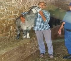 Çalınan keçileri bulununca sarılıp hasret giderdi (haberihbarhatti) Tags: antalya elmalı finike jandarma jandarmakomutanlığı operasyon