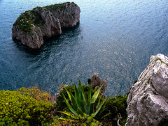 90-03 pan fels capri steil ag30-145 (ulrich kracke (many thanks for more than 1 Mill vi) Tags: i agave amalfi blattspitz capri fels steilküste