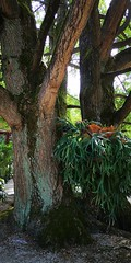 Lucca (Pierre MM) Tags: jardin botanique de lucca toscane italie