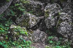 DSC_0065 (Hilðr) Tags: mountains trees rocks forest woods view horizon canyon hills pine stones moss norse inspiration spirit hiking dark