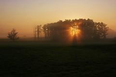 sunrise (mariuszpawel) Tags: mazury sunrise landscape nikon tree mist fog photography nature colour europe morning poland dawn sun light aerialphotography krajobraz polska przyroda świt treesinmist fall