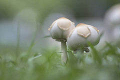 菇菇涼亭 (Sam's Photography Life) Tags: 植物 台中 公園 180mm d850 nature nikon 尼康