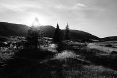 Fields of light (Mi-Fo-to) Tags: montagna mountain dolomiti dolomites alpe villandro erba grass luce light spazio aperto open space panorama landscape shining sun sole italy italia