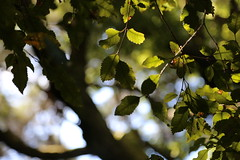 reference-150 (TLCStudentReferences) Tags: helenastackhouse leaves newzealand tree texture bokeh web lichen moss nz flowers