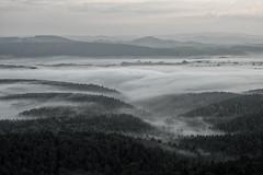 Nebeltal (lebastian) Tags: panasonic dmcgx8 olympus m1240mm f28 elbsandsteingebirge sächsische schweiz landscape mountain