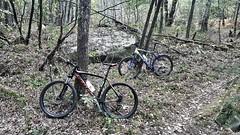 South Seine & Marne MTB (jonathan.kraus30) Tags: scott scottbike bh bhbike ride garmin seineetmarne wood forest 3pignonsforest autumn mtb moutainbike nature vtt shimano