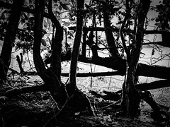 rnor80590.jpg (Robert Norbury) Tags: fuckit somearelandscapessomearenot icantbearsedkeywording fineartphotography blackandwhite photographer itdoesntmatterwhattheyarepicturesoftheyarejustpictures itdoesntmatterwhattheyarepicturesoftheyarejustpictur