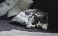 Stiljte (My Photolifestyle) Tags: fs180826 stiltje fotosondag cats katter