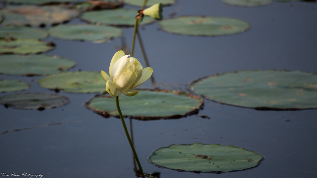 The Worlds Best Photos Of Lotus And Wildlife Flickr Hive Mind