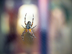 Spider Fashion Window Shopping 1 of 2 (Orbmiser) Tags: mzuikoed1240mmf28pro 43rds em1 mirrorless olympus ore portland m43rds insect spider web window sidewalk