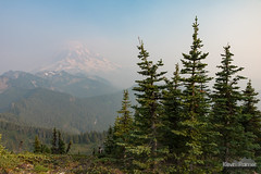 Rainier Treetops (kevin-palmer) Tags: mountrainier nationalpark mountrainiernationalpark washington cascades mountains nikond750 august summer smoke smoky evening hazy tolmiepeak trees forest sky tamron2470mmf28 scenic view