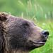 Model Bear