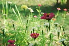 DSC_4705 (FMAG) Tags: 201809 dzialka kwiatki macro