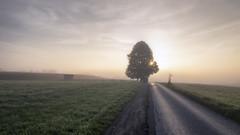 Es wird Herbst... (blichb) Tags: 2018 baum bayern chiemgau deutschland herbst iphone7 iphoneography nebel oberbayern rosenheimerland stephanskirchen strase blichb morgens sonnenaufgang de