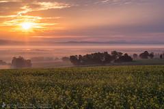 Foggy morning (Christian Birzer) Tags: nebel landschaft sonne himmel unschärfe kalt wald orange gras wiese gelb grün natur baum weite draussen idylle blau schwarz sonnenaufgang feld ferne braun wolken gegenlicht