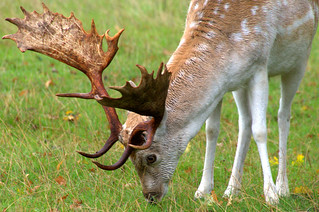 Close to the stag