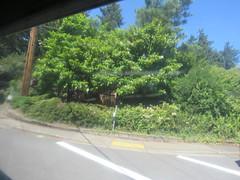 IMG_8369 (Andy E. Nystrom) Tags: bellevue washington wa bellevuewashington