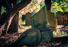 Camperdown Cemetery (eggwah123) Tags: voigtlander voigtlander40mmf12 voigtlander40mmf12vm voigtlander40mmf12mmount 40mmf12 40mm vm40mmf12 sonya7ii a7ii sonya7 sonyemount manualfocuslens manualfocus splittoning tomb oldtomb bokeh depthoffield adaptedlens cemetery