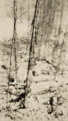 Drought (A. Bockheim) Tags: wild plants drought korea 2018 d7100