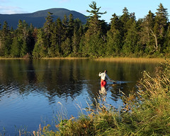 Too small to keep for breakfast (*CA*) Tags: maine westbranchpondcamps lake flyfishing fisherman morning