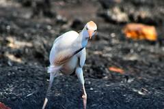 im not drunk (heatgirlrvd) Tags: tree burn burning animals birds bird water fish zebra wild life