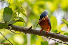 D850-2549 (yowstanley) Tags: nikon nature d850 200500mm tree garden bird
