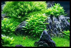 Green Aqua Showroom Budapest (viktorlantos) Tags: aquascaping aquascape aquariumplants adahungary aquarium aquascapingshopbudapest aquadesignamano ada aquaticplants plantedaquarium plantedtank plantedaquariumgallery greenaquagallery greenaquahungary aquariumphotography underwaterphotography inspiration passion interriordesign növényesakvárium budapest
