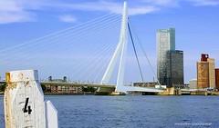 Erasmusbridge (nickname: The Swan) Rotterdam (Maarten Kleijkamp) Tags: erasmus bridge brug zwaan swan rotterdam riverdenieuwemaas holland thenetherlands
