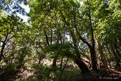 Green Underbrush 6488 (Ursula in Aus (Resting - Away)) Tags: bc brickyardcommunitypark canada nanoose pnw pacificnorthwest iphone parksville
