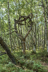 (oliverzet) Tags: beautyinnature day environment forest greencolor growth land landscape nature nopeople nonurbanscene outdoors plant scenicsnature tranquilscene tranquility tree treetrunk trunk woodland