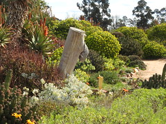 Cactus Country, Strathmerton 1434 (Lesley A Butler) Tags: victoria strathmerton cactuscountry cacti australia