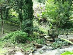 Trail 1. (natureflower) Tags: trail green forest bridge rocks trees waterfall moss tranquil