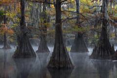 Formation (D Breezy - davidthompsonphotography.com) Tags: swmaps landscape southernusa bayou cypress baldcypress mist fog chilly cold composition fall autumn travel kayak nikon d800e peaceful eerie mood moody