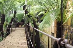 Passerelle (caly76) Tags: passerelle serre plante lanterne normandie châteauduchampsdebataille tropical olympus amateur débutant