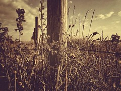 In a line (J.C. Moyer) Tags: clouds sky pole lpcover plants color colour mood rustic iphonese nature grass posts barbedwire flora weed
