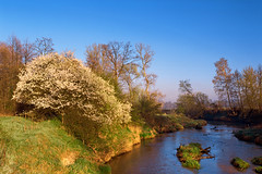 Spring morning (fotoswietokrzyskie) Tags: spring water nature river poland film analog landscapes dawn medium format kodak ektar 100 bobrza mamiyarz67 6x7 landscape tree mist sky sunrise grass sekor50mm