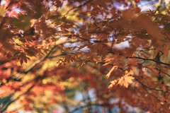 DSC_0184 (juor2) Tags: d750 nikon scene travel japan fukushima aizuwakamatsu lake pond maple autumn scenery volcano colorful