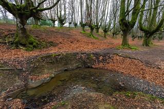 Otzarreta Beech Forest  180317-5031