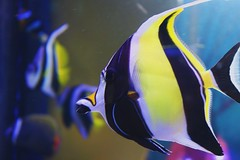 Camden Aquarium (lilianaizaola) Tags: animal aquarium yellow black white stripe fish underwater ocean sea