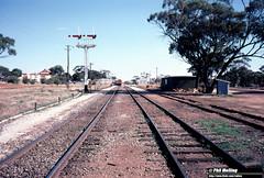 3657 Goomalling Yard on 15 May 1983 (RailWA) Tags: philmelling westrail 1983 goomalling